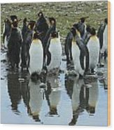 Reflecting King Penguins Wood Print