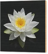 Reflecting Water Lilly IIi Wood Print