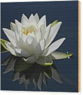 Reflecting Water Lilly Wood Print