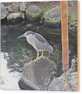 Reflection Of A Black-crowned Night Heron Wood Print