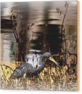 Reflection Of A Heron Wood Print
