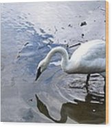Reflection Of A Lone White Swan Wood Print