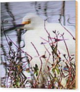 Reflection Of A Snowy Egret Wood Print