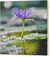 Reflection Of Life Wood Print