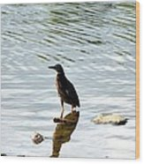 Reflection Of The Green Heron Wood Print