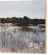 Reflections In The Everglades  Wood Print