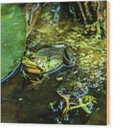 Reflections Of A Bullfrog Wood Print