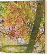 Reflections Of A Colorful Fall 001 Wood Print