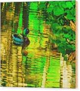 Reflections Of A Mallard Duck Wood Print