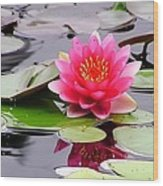 Reflections Of A Pink Waterlily  Wood Print