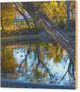 Reflections Of A Pond 2 Wood Print