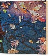 Seasons Of Refletion Wood Print