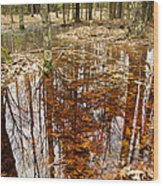 Reflections On A Forest Floor Wood Print