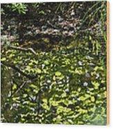 Reflective Wood Print