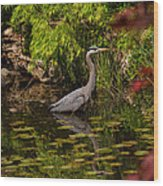 Reflective Great Blue Heron Wood Print