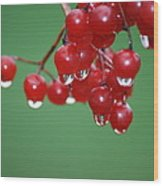 Reflective Red Berries  Wood Print