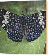 Regal Blue Butterfly Wood Print