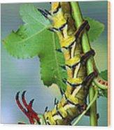 Regal Moth Caterpillar Wood Print