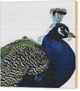 Regal Peacock Wood Print