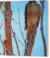 Regal Raptor IIi Wood Print