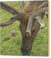 Reindeer Head Wood Print