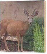 Reindeer In The Garden Wood Print