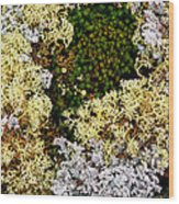 Reindeer Moss And Lichens Wood Print