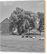 Reive Blvd Barn 15059b Wood Print