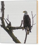 Relaxed Eagle Wood Print