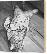Relaxing Cat Wood Print