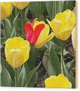 Renegade Tulip Wood Print