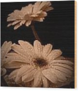 Renewal Sepia Wood Print