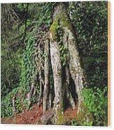 Replenishing The Earth II Wood Print
