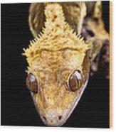 Reptile Close Up On Black Wood Print
