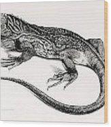 Reptile Wood Print