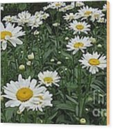 Requested Daisies Wood Print