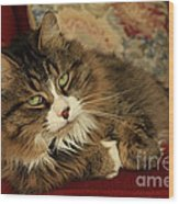 Rescue Cat Living In The Lap Of Luxury Wood Print