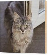 Rescue Cat Looks For Forever Home Wood Print
