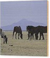 Reservation Horses 4 Wood Print