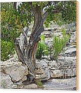 Resilient Tree Wood Print