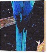 Resplendant Quetzal Of Costa Rica Wood Print