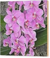 Resplendent Orchid Wood Print