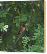 Restful Perch Wood Print
