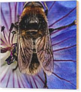 Resting Bee Wood Print