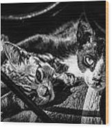 Resting Cats Wood Print
