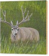 Resting Deer Wood Print