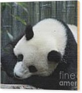 Resting Giant Panda Bear Wood Print