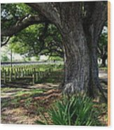Resting In The Shade Wood Print by Beth Vincent