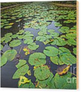 Resting Lilly Pads Wood Print