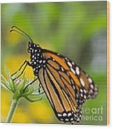 Resting Monarch Butterfly Wood Print